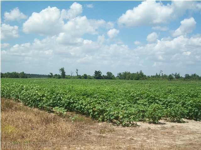 3a Highway 99, Walnut Hill, FL 32568 (MLS #267803) :: Elite Real Estate Solutions