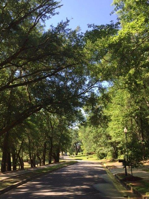 11 Summer Lake Street, Fairhope, AL 36532 (MLS #193949) :: Elite Real Estate Solutions