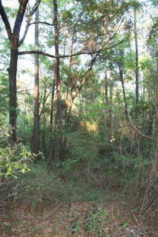 0 Browns Landing Road, Seminole, AL 36574 (MLS #240839) :: Gulf Coast Experts Real Estate Team