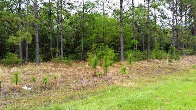 0 Dragoon Court, Summerdale, AL 36580 (MLS #249944) :: Elite Real Estate Solutions