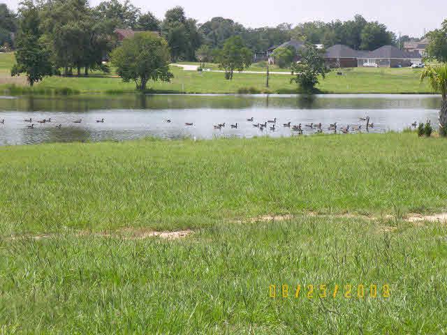 0 Edgewater Circle, Loxley, AL 36551 (MLS #278738) :: Elite Real Estate Solutions