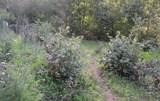 37 Conifer Way - Photo 24