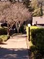 244 Los Alamos Road - Photo 36