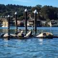 64 Liberty Dock - Photo 10