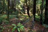 5888 Lucas Valley Road - Photo 16