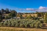 4381 Bodega Avenue - Photo 51