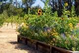 4059 Old Sonoma Road - Photo 21