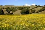 5 Meadow View Lane - Photo 2