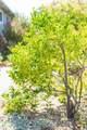 1024 Los Gamos Road - Photo 19
