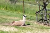 5550 Plum Ranch Road - Photo 43