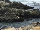 387 Grey Whale - Photo 40