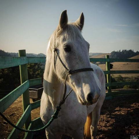 1109 Tannery Creek Road, Bodega, CA 95465 (#21719138) :: RE/MAX PROs