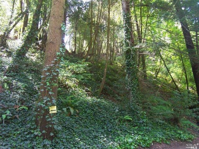 18094 Hwy 116 Highway, Guerneville, CA 95446 (#21900940) :: RE/MAX GOLD