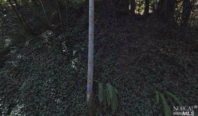 21697 Starrett Hill Drive, Monte Rio, CA 95462 (#321006577) :: Hiraeth Homes