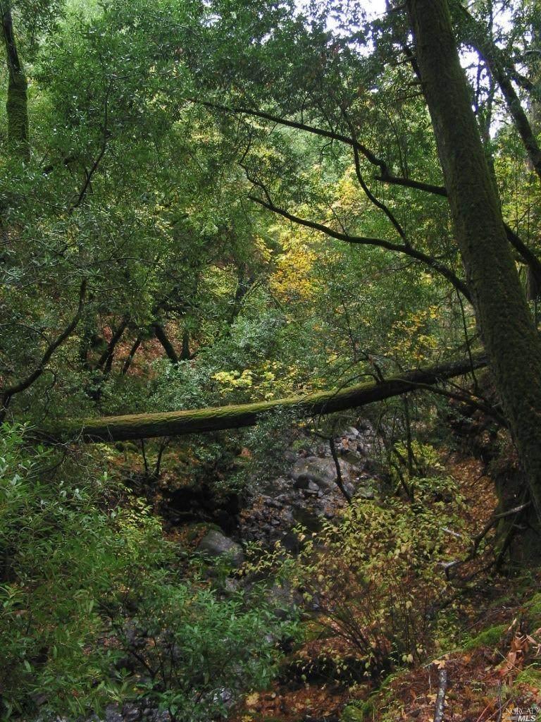 18754 Canyon Road - Photo 1