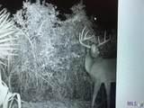 12475 Laurel Ridge Rd - Photo 16