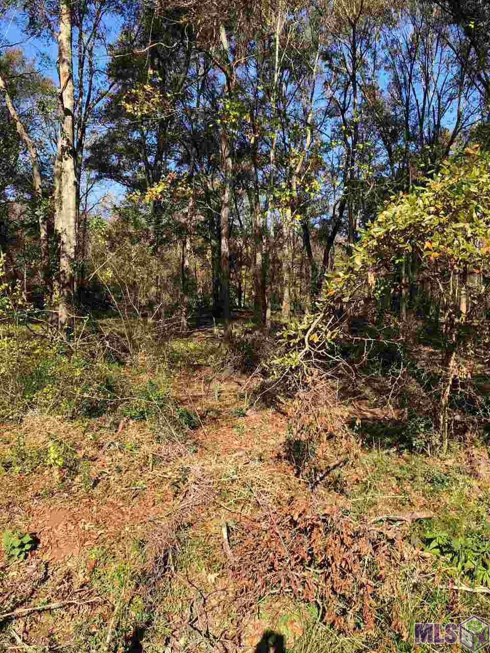 TBD Lot 2 Muddy Creek Rd - Photo 1