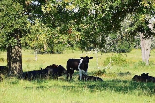 0010 County Road 155, Bedias, TX 77831 (MLS #20010983) :: Chapman Properties Group