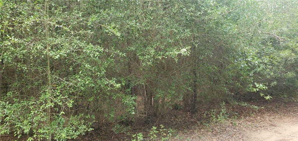 13386 Scarlet Oak - Photo 1
