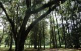 87 Winding Oak Drive - Photo 2