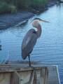 906 Gull Cove - Photo 17