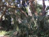 234 Locust Fence Road - Photo 4