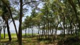 95 Sea Pines Drive - Photo 5
