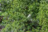 9 Heron Walk - Photo 44