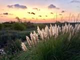 2 Cedar Reef Drive - Photo 30