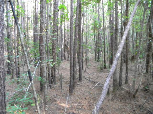0000 Hwy 17 And I 95, Ridgeland, SC 29936 (MLS #166883) :: RE/MAX Island Realty