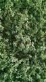 0 Irrigated Alfalfa Acreage - Photo 2
