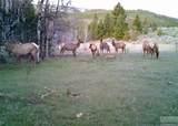 1270 Nevada Creek Ranch Dr - Photo 6