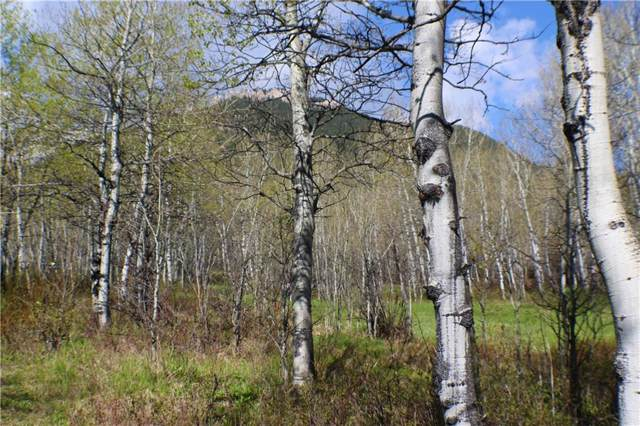 00 Kinikinik Trail Loop Lot #3, Red Lodge, MT 59068 (MLS #301383) :: Realty Billings