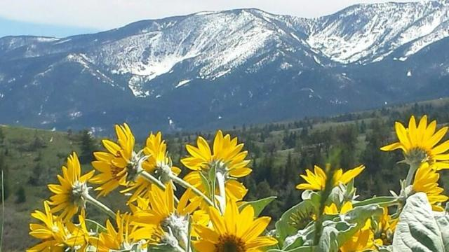 Tracts 2 & 3 Turnback Trail, Red Lodge, MT 59068 (MLS #270808) :: Realty Billings