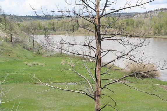 361 Owl Canyon Road, Columbus, MT 59069 (MLS #286369) :: Search Billings Real Estate Group