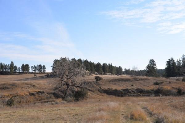 400 Acres Dean Creek, Lavina, MT 59046 (MLS #291463) :: Realty Billings