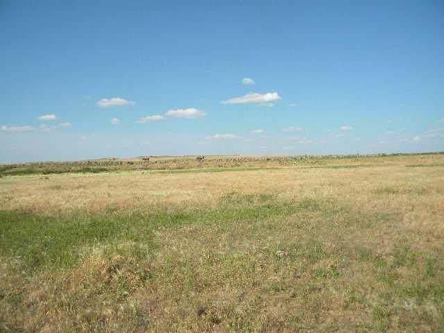 4225 Scandia Road, Shepherd, MT 59079 (MLS #301826) :: MK Realty