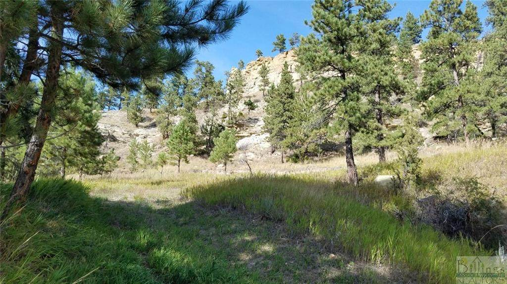 4741 Box Canyon Road - Photo 1