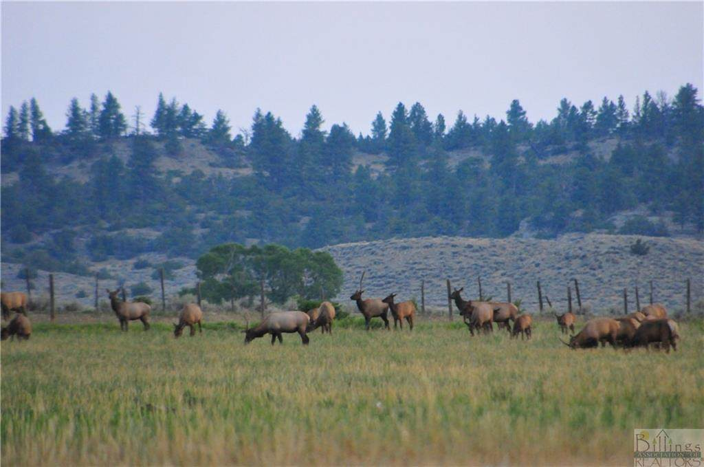876 Lower Sweet Grass Rd - Photo 1