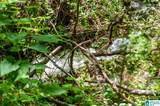 Poplar Springs Trail - Photo 20