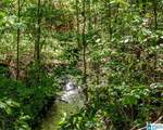 Poplar Springs Trail - Photo 21