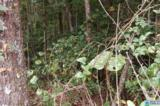26 Acres Old Shocco Rd - Photo 10