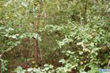 26 Acres Old Shocco Rd - Photo 9