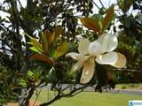 5203 Scarlet Oak Cir - Photo 39