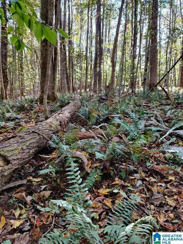 0 Heritage Creek Dr - Photo 1