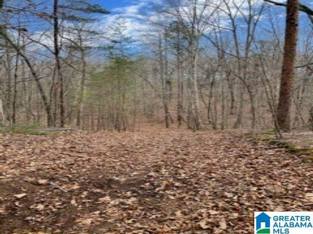5565 Country Road - Photo 1