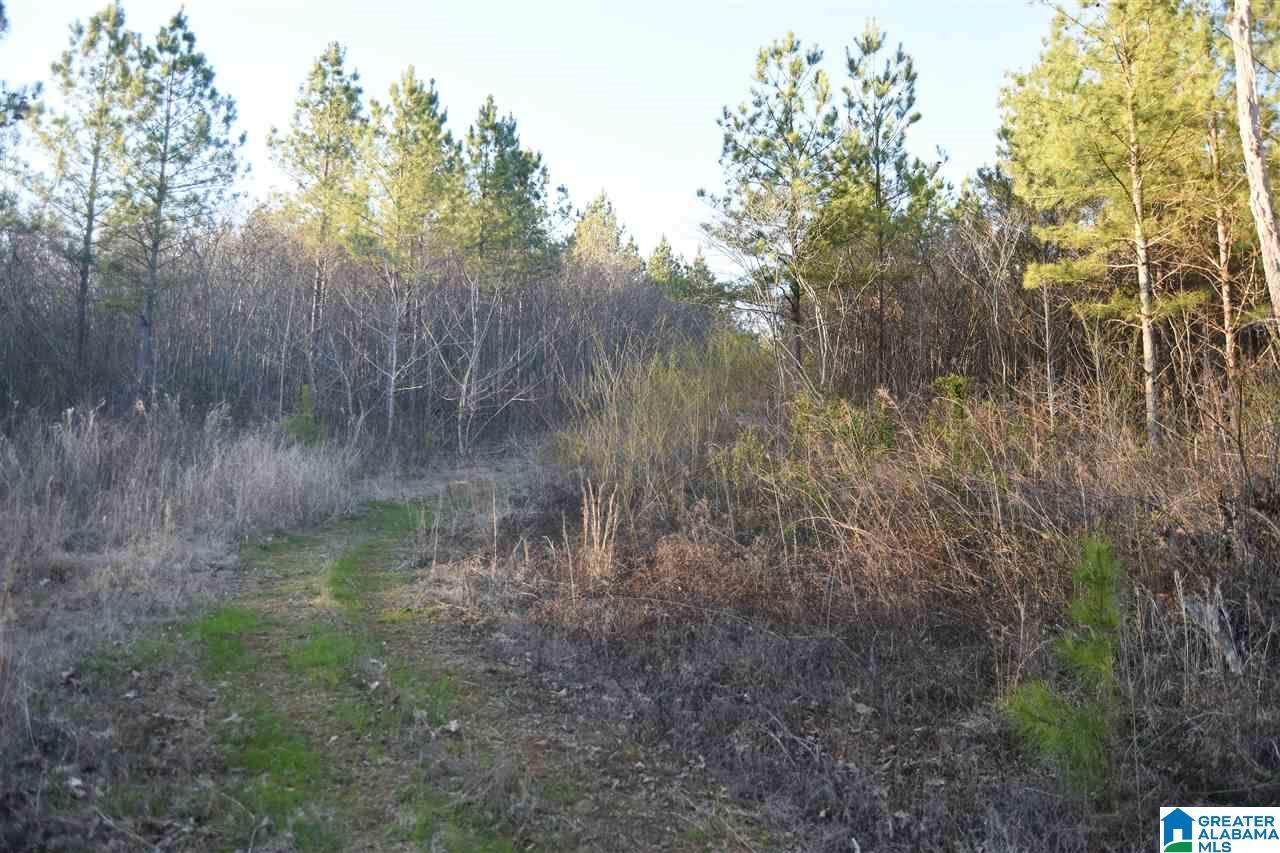 0 Co Rd 107 - Photo 1