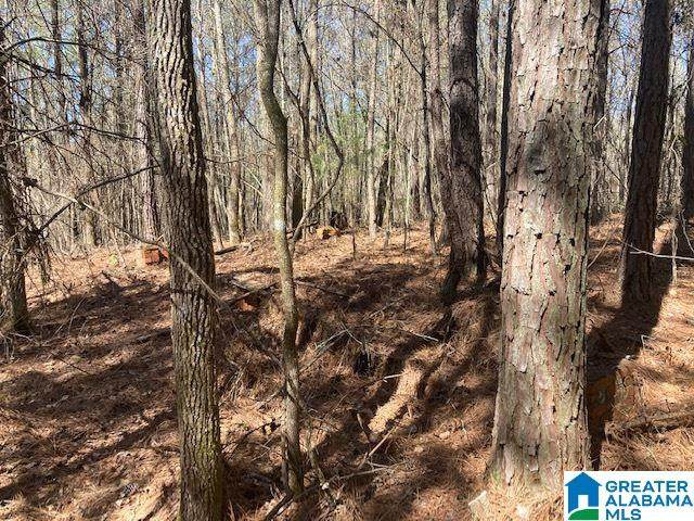Co Rd 30 80 Ac, Cragford, AL 36255 (MLS #1280664) :: Howard Whatley