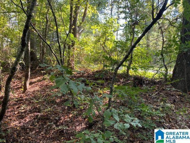 2 acres County Road 63 #0, Ranburne, AL 36262 (MLS #1281610) :: Josh Vernon Group