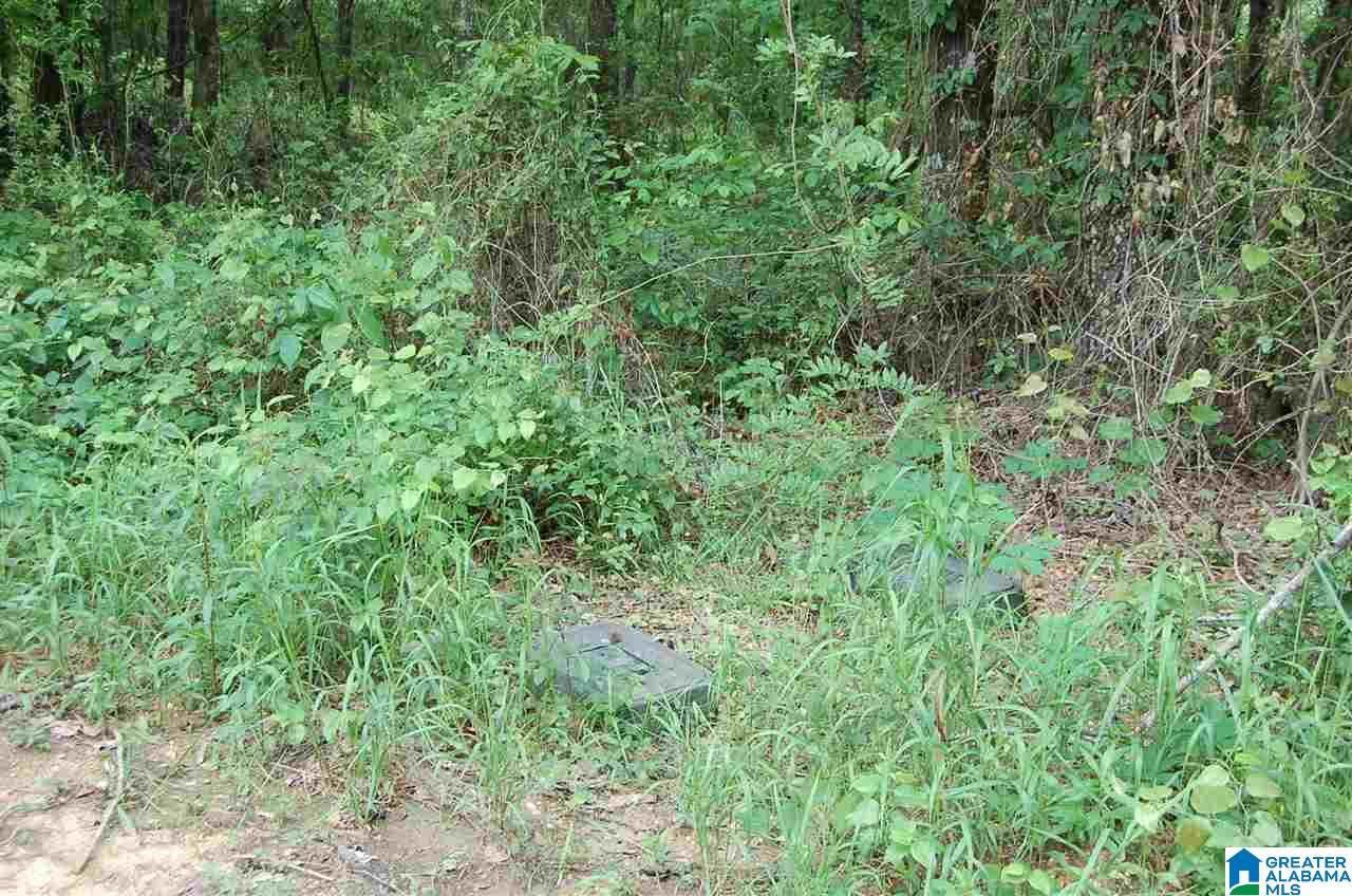 1 County Road 540 - Photo 1